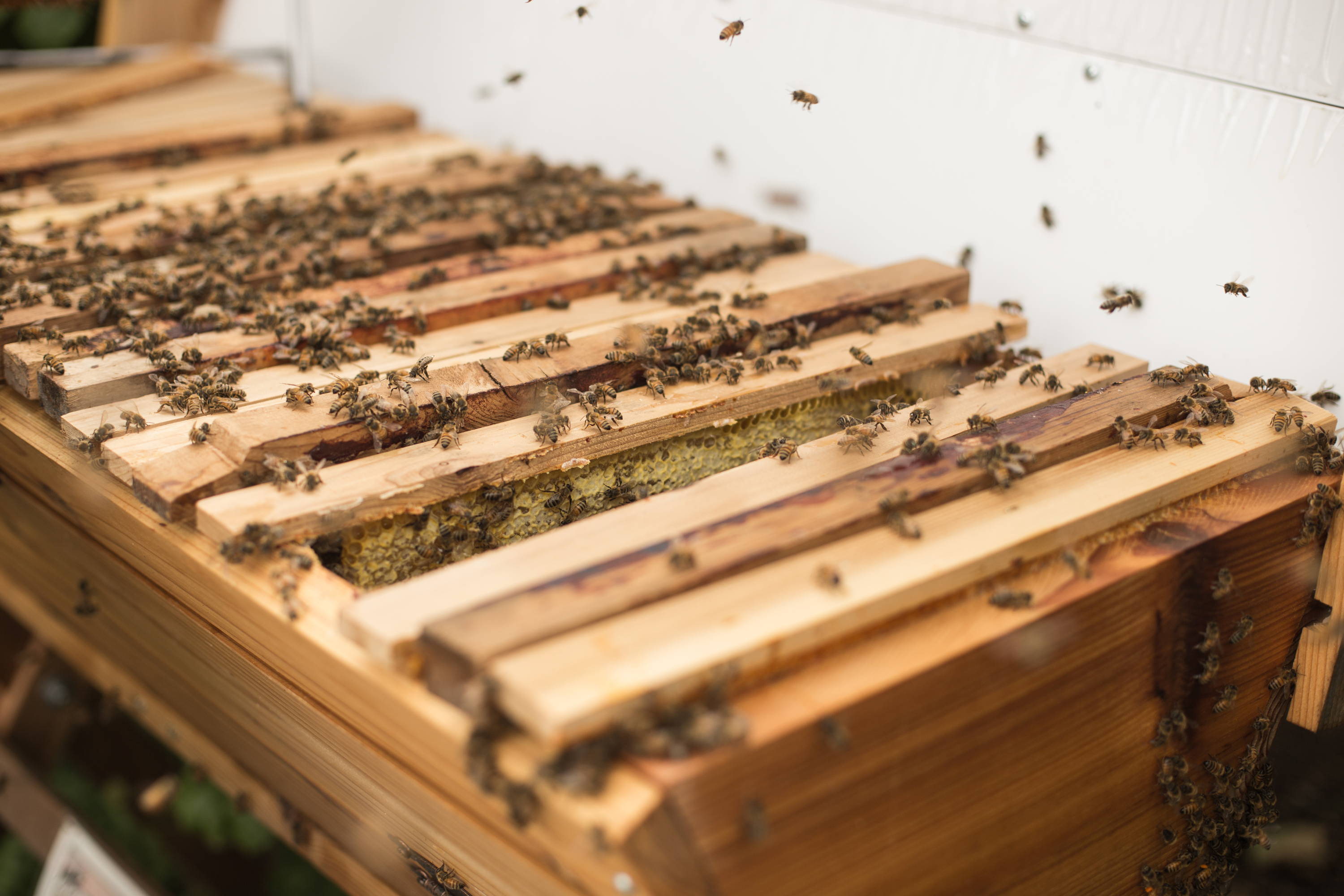 Top Bar Hives Are One Of The Oldest Hive Types. Modern Designs Have Evolved  From Felled Logs In Nature Being Populated By Feral Colonies.