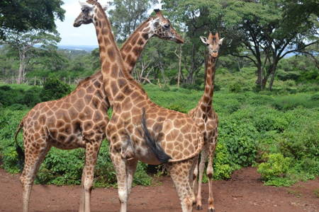 9-Days Discover Kenya Safaris