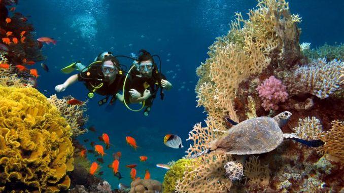 Scuba dive in the Red Sea
