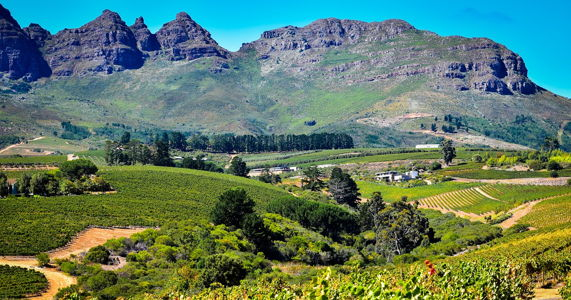 a-guide-to-the-cape-winelands