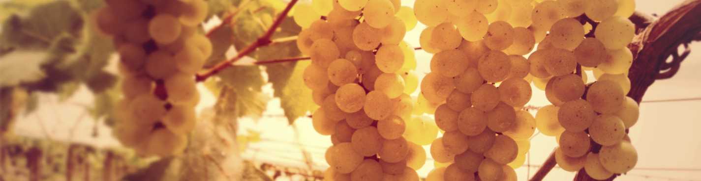 Праздник виноделия в португальской деревне