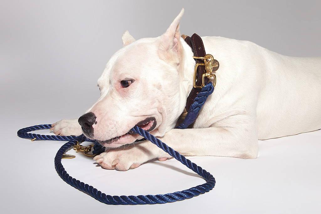 DOG & CO. | Leads