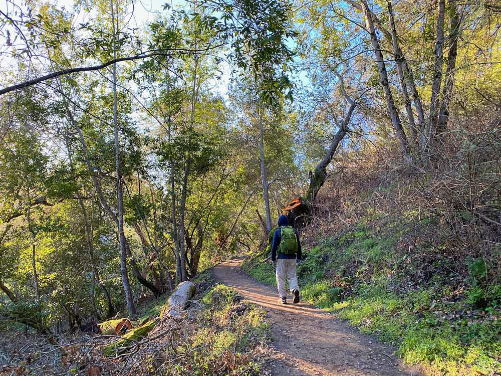 Hiker on a forested trail at Edgewood Park ad Natural Preserve in Woodside