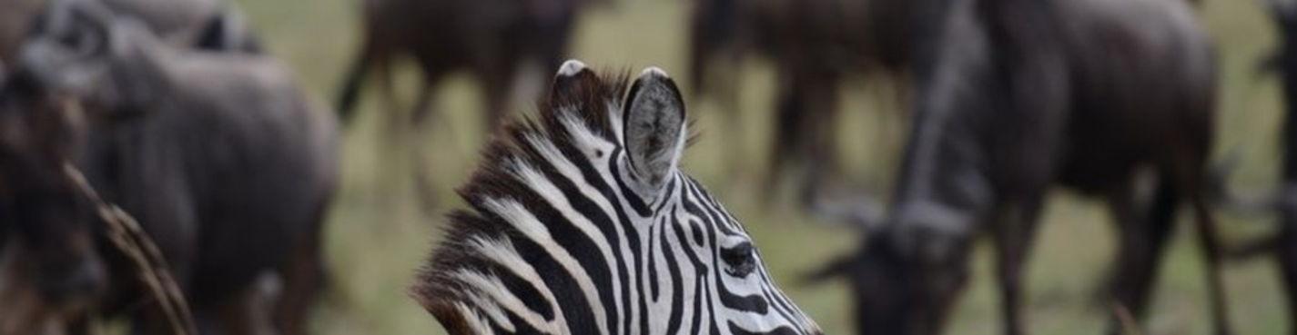 Сафари с русскоговорящим гидом по национальным паркам Масай Мара, Накуру, Хеллс Гейт, озеро Найваша.