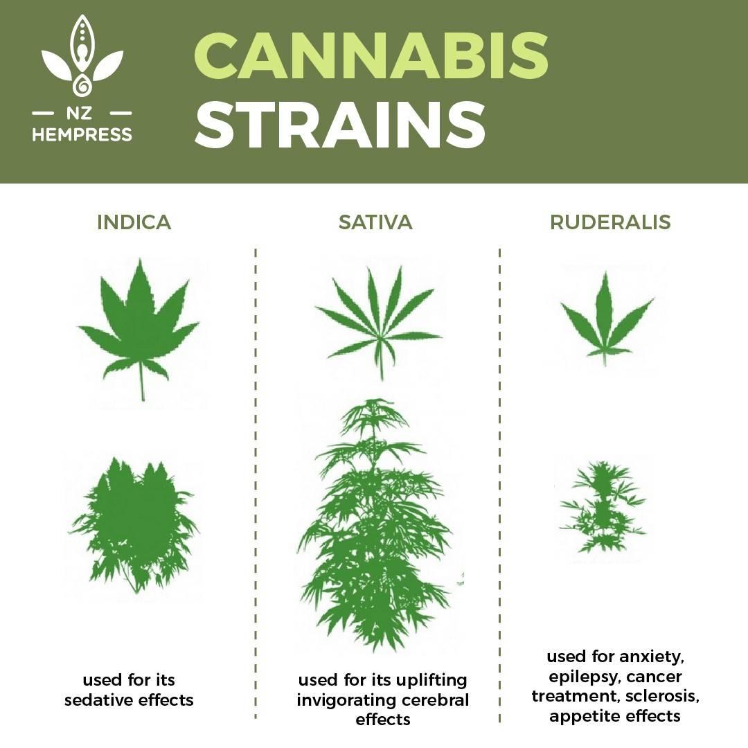 cannabis cbd nz