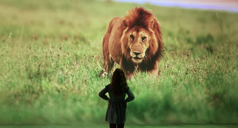 Illuminarium: WILD: A Safari Experience