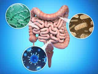 Symptoms of Leaky Gut - auto