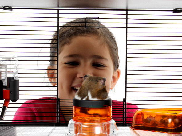 Qute hamster cage with child looking in