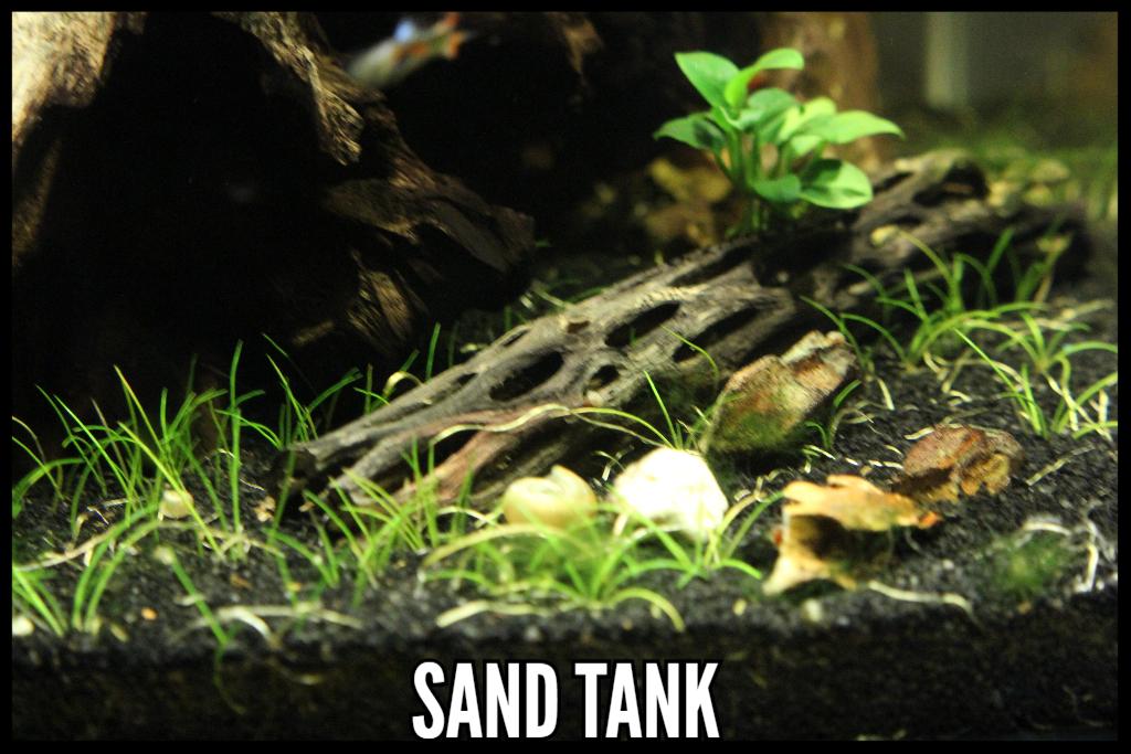 Sand Aquarium