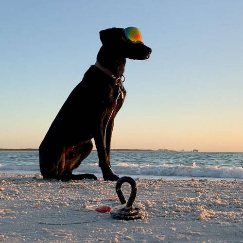 black dog with goggles tied to gravity stake at the beach