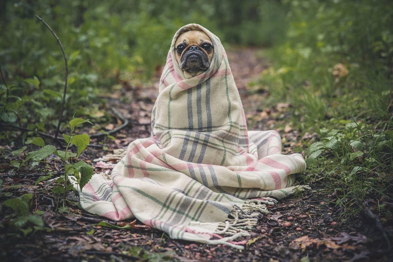 Zwingerhusten beim Hund - Titelbild