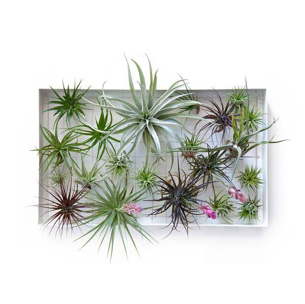 rectangle airplant frame airplantman