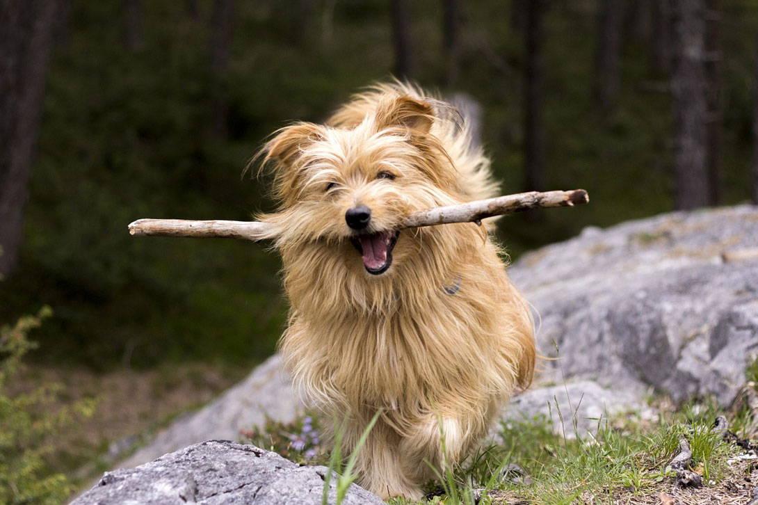 Stöckchen fangen kann für den Hund gefährlich werden