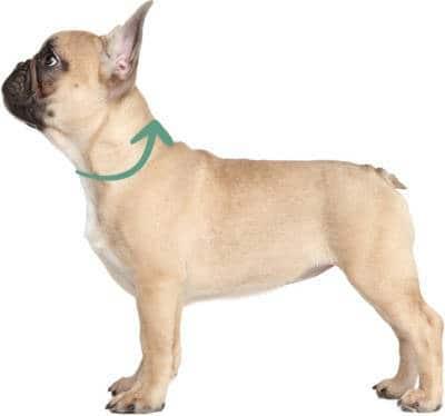 Loop Schal Hund
