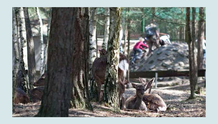 tier freizeit und saurierpark germendorf rehe