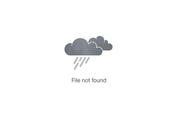 Lion Park Expedition