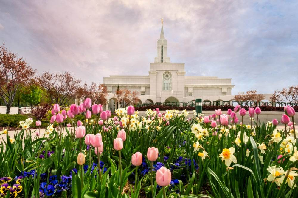 Bountiful Temple surrounded by yellow and pink tulips.