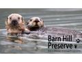 Two 3-Hour Otter Swim Encounter Tours
