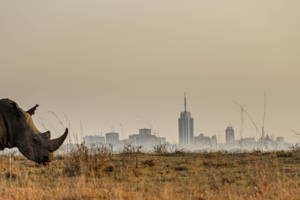 Half Day in Nairobi National Park
