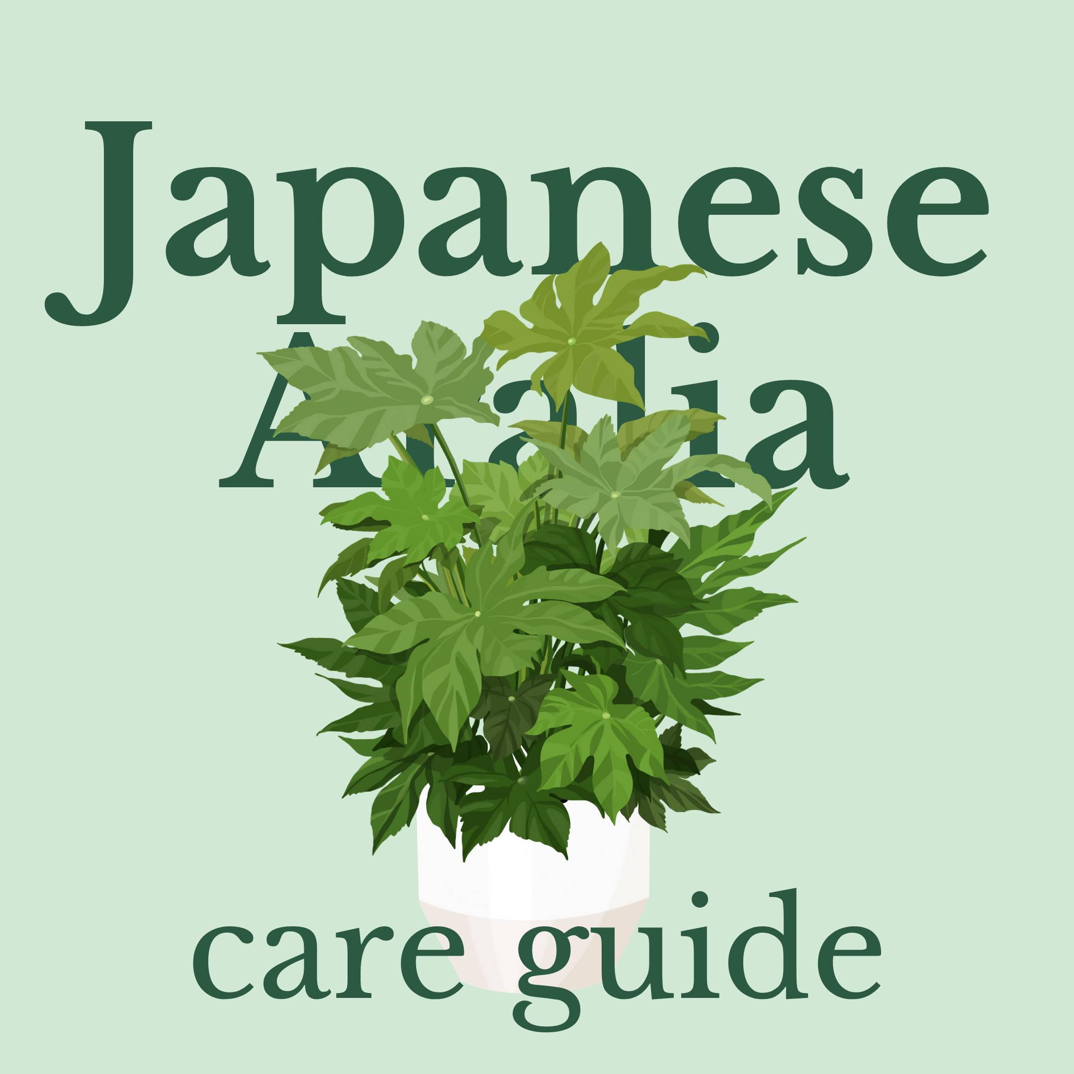 Drawing of japanese aralia