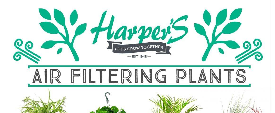 air filtering plants poster