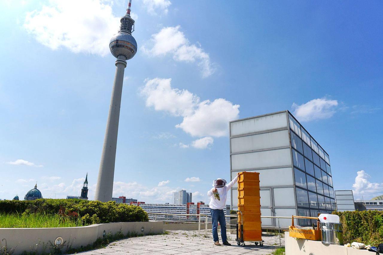 Honigernte auf dem Dach der Berliner Sparkasse.