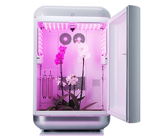 Seedo Home Grow Box