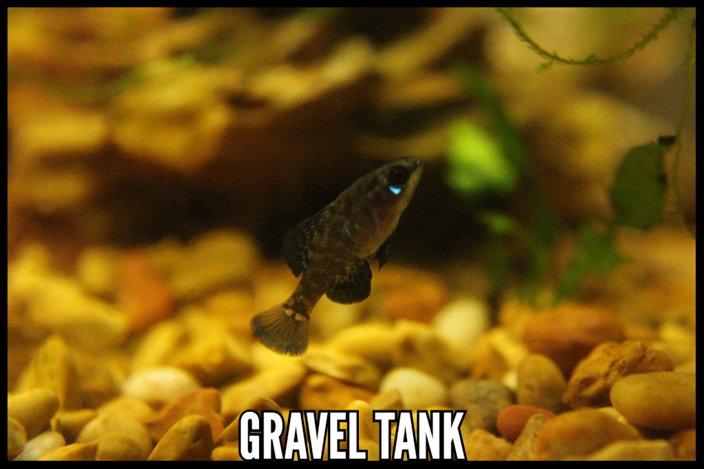 Gravel Tank