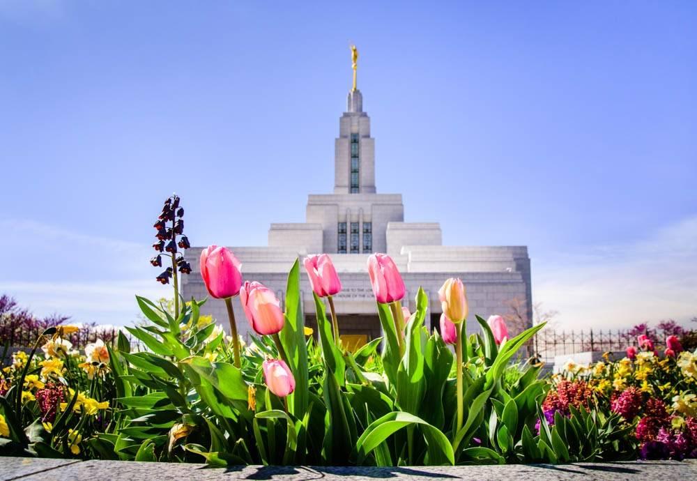 Photo of Draper Utah LDS Temple behind spring tulips.