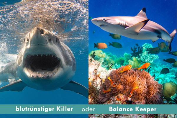 Hai im Meer als böser Killer