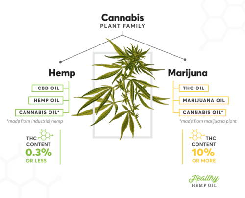 Where To Buy Cbd Oil For Scoliosis Pain Can Be Fun For Anyone