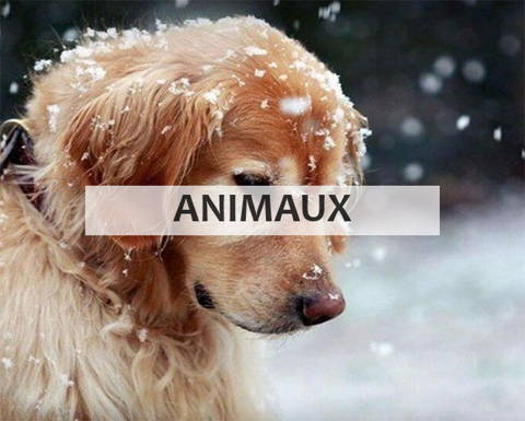 Broderie diamant collection animaux