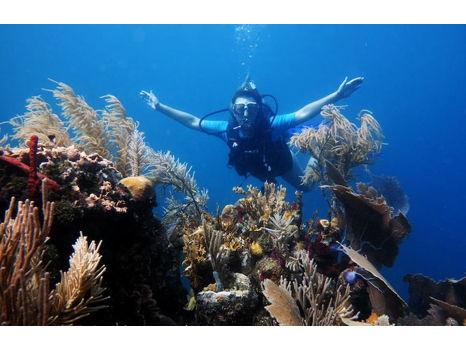 SCUBA Experience at Coral View Beach Resort, Honduras