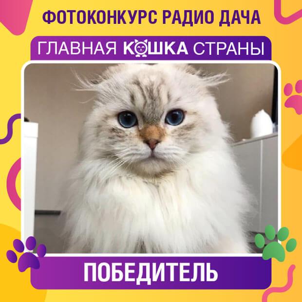 «Радио Дача» объявляет итоги конкурса «Главная кошка страны» - Новости радио OnAir.ru