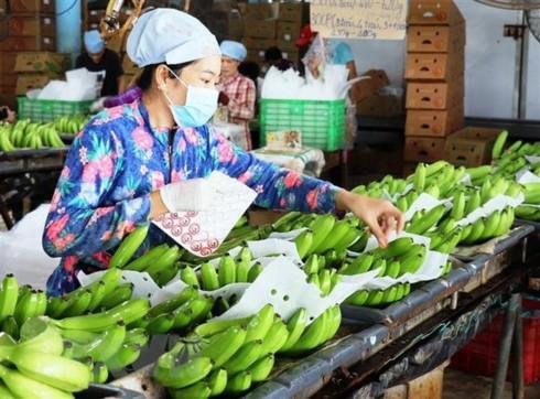 Vietnam spends USD1.57 billion on fruit, vegetables in 11 months