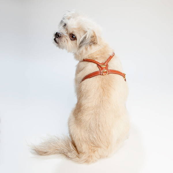 DOG & CO. | Harnesses