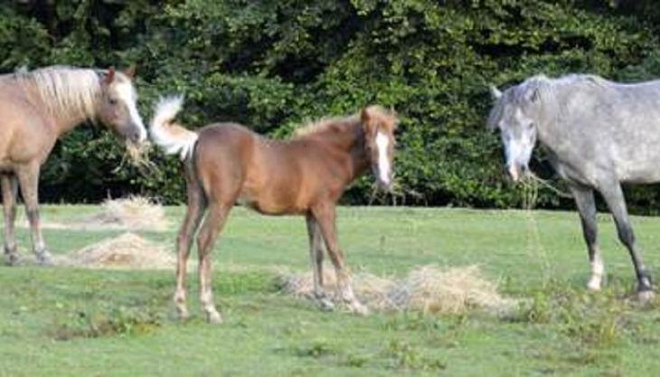 die reitzwerge pferde auf wiese