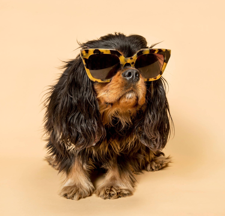 Framour Eyewear occhiali da sole