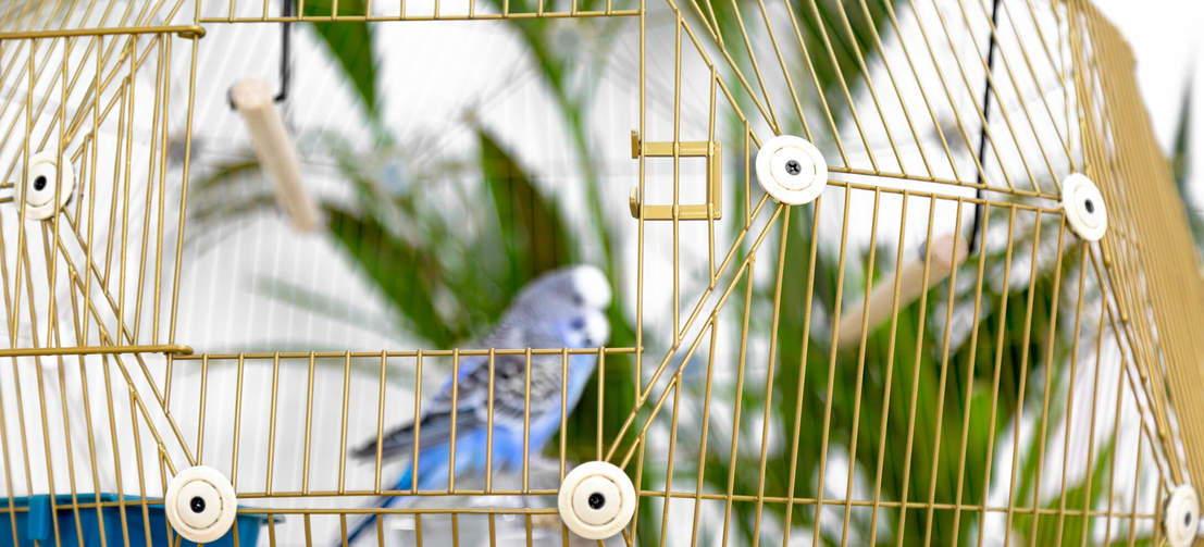 Omlet Geo Bird Cage