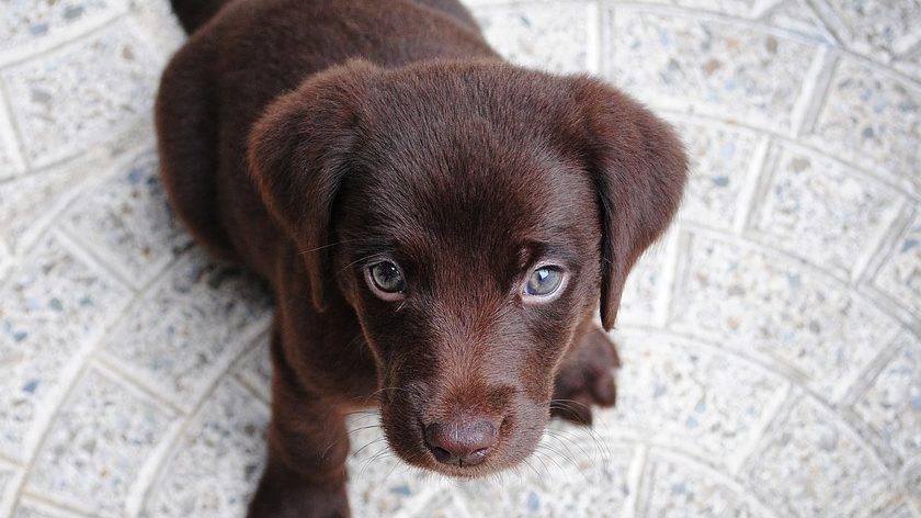 Hobbyzucht Und Hund Kaufen Ein Welpenschicksal Vetevo Gmbh