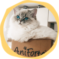 Cat sitting on AniForte parcel
