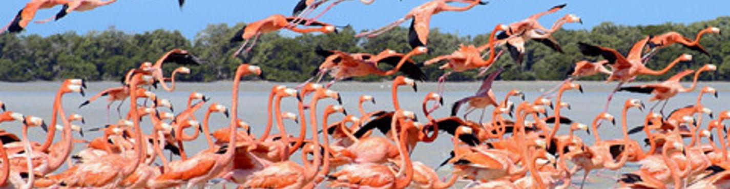 Фламинго-тур