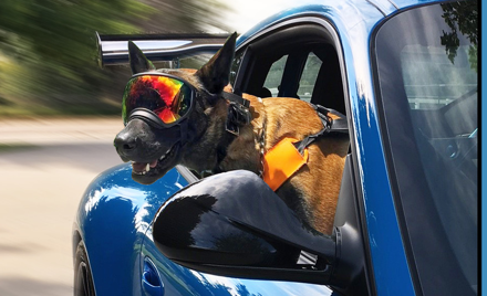 German Dogs and German Cars DE - for nondrivers