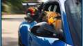 German Dogs and German Cars DE - Volunteers
