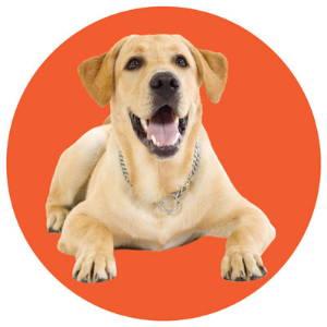 Dog Portrait - select