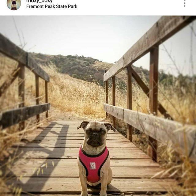 RC Pets Dog Harness