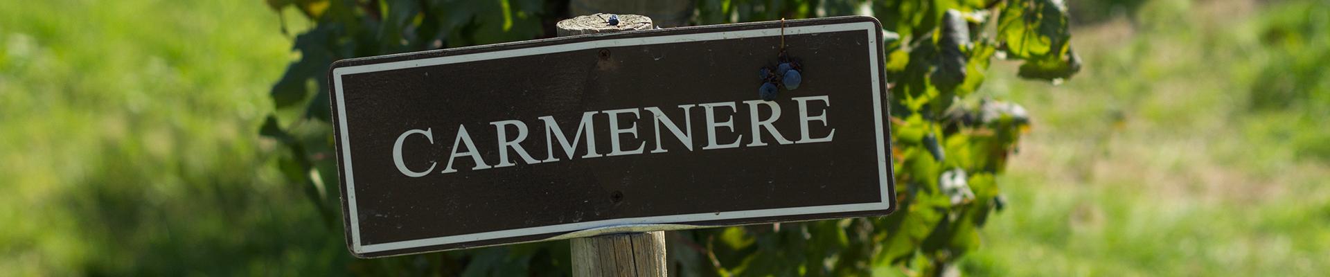 CARMENÈRE, LA CEPA INSIGNE DE CHILE