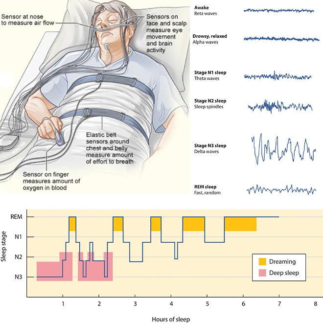 دراسة النوم