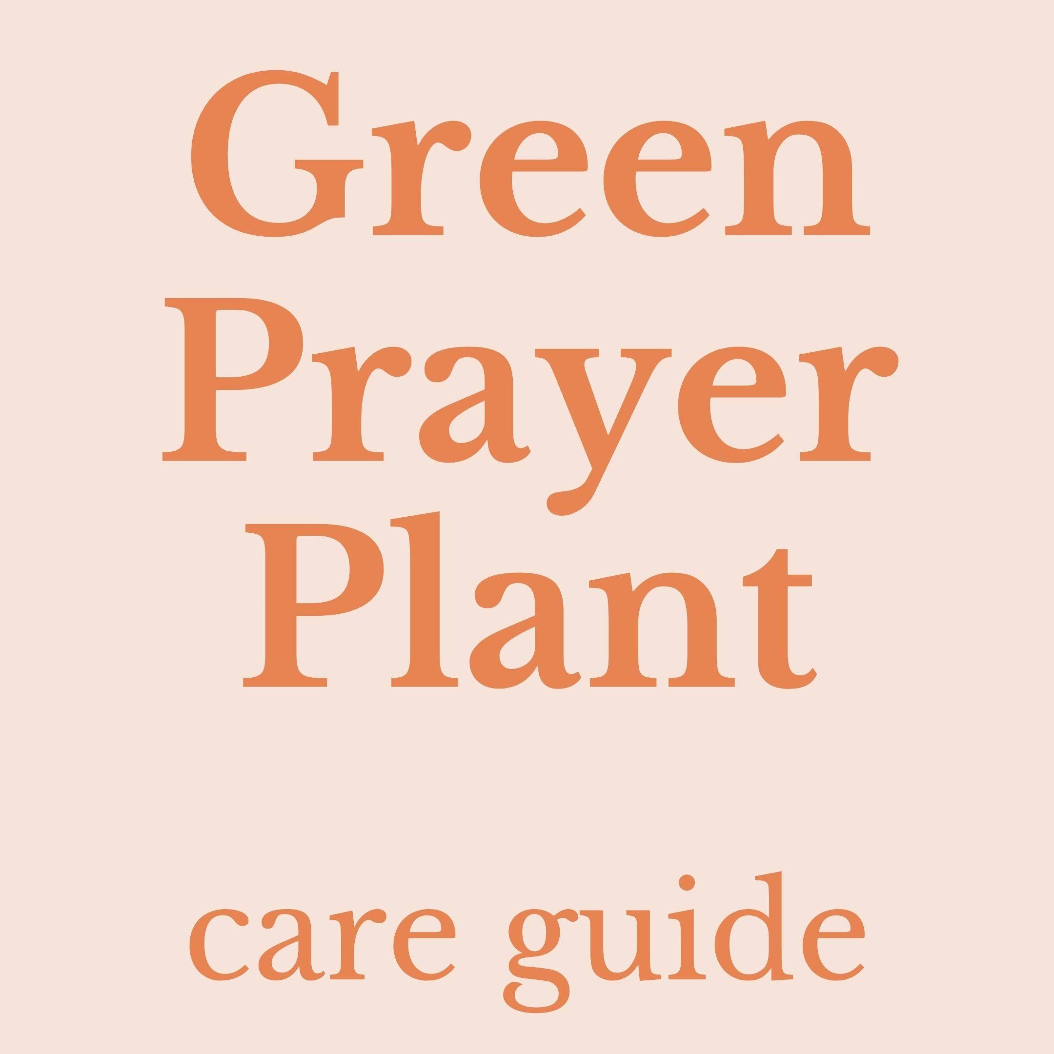 Drawing of green prayer plant