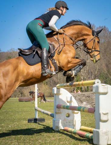 kunststoffbeschlag, kleben, hufe, pferd